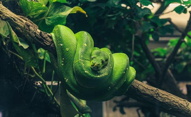 stočený zelený had na stromě