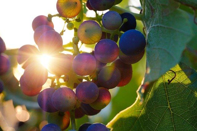 hroznové víno.jpg